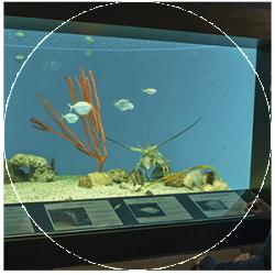 UGA Aquarium